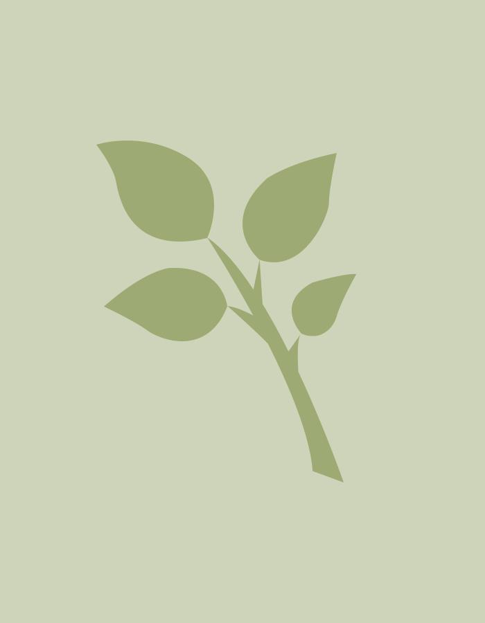 <span class='lvm-name'>Hydrangea paniculata 'Early Sensation' ('Bulk')</span>