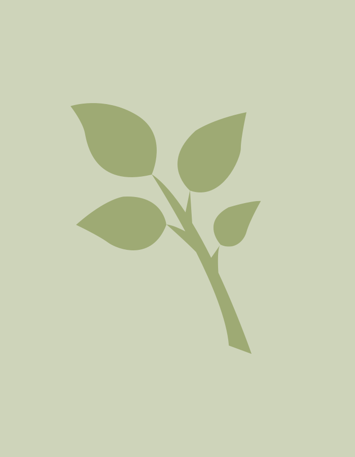 <span class='lvm-name'>Hydrangea paniculata 'Phantom'</span>